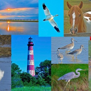 A sample of Chincoteague